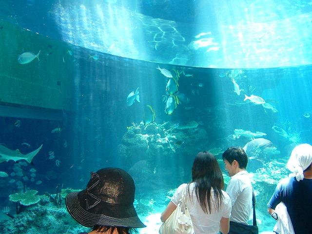 沖縄の美ら海水族館は色々な魚が見れて楽しい